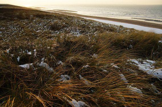 zeereep in de katwijkse duinen