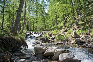 Provence rivier bos. van Rene du Chatenier