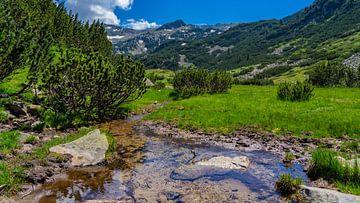 Rivier in de Pirin bergen in Bulgarije van Jessica Lokker