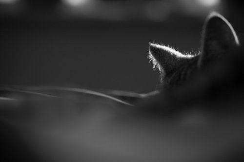 Schlafende Katze von Lieke Roodbol