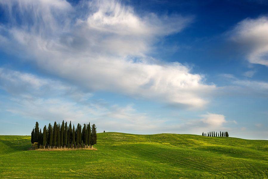 Groep cipressen in een glooiend landschap in Toscane van iPics Photography