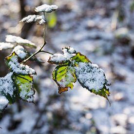 snowy wood van ProPhoto Pictures