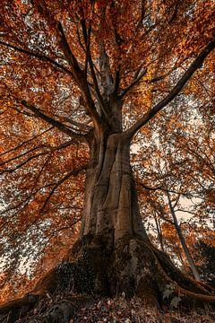 Baum von Angelique Spanjaard-Oomen