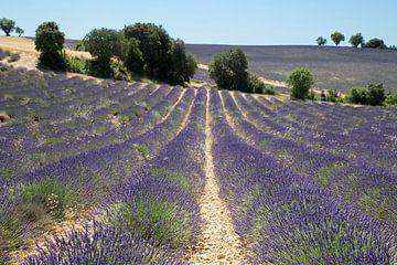 Lavendellandschap sur Jolanda van Eek