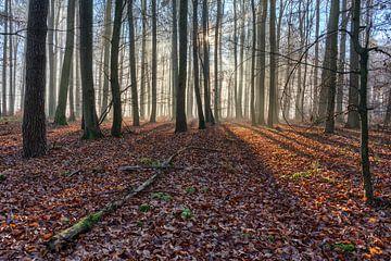 Sonne und Nebel im Wald von Uwe Ulrich Grün