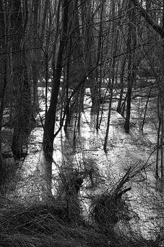 Zonnestralen in het bos von Elize Fotografie