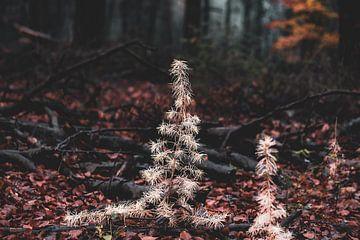 weißer Weihnachtsbaum im dunklen Wald von Tania Perneel