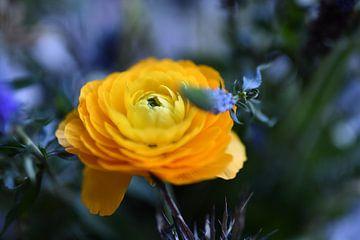 Yellow love van Femke Sijtsma