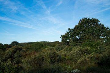 Heuvellandschap Den Haag van Alejandro Vivas