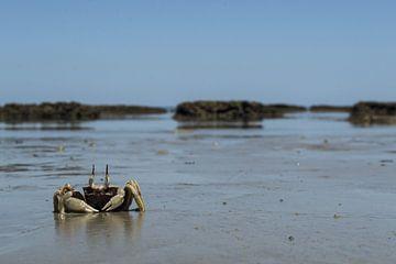 Krab op het Australische strand van Tessa Kramer