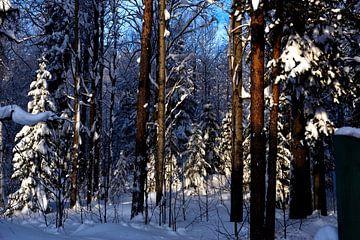 Fir in snow von Christer Andersson