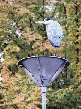 Reiger staand op lantaarnpaal van Rinke Velds