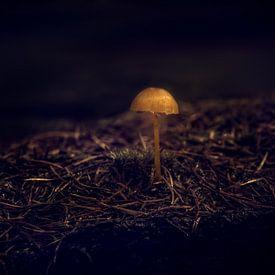 Alone in the Dark von Tim Abeln