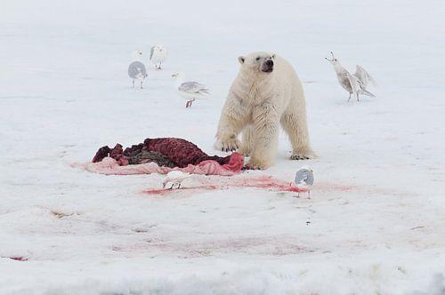 IJsbeer en prooi van Peter Zwitser
