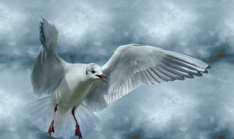 Schrei nach Freiheit van Ursula Di Chito