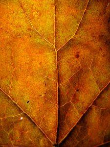 Surrealistisch oranje boomblad van