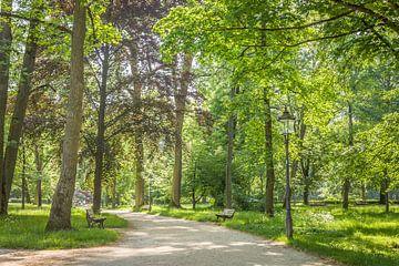Frühsommer im Kurpark von Bad Homburg vor der Höhe sur Christian Müringer