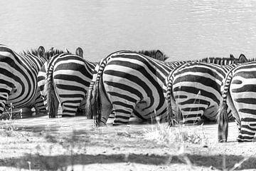 Zebras sind durstig von Diane Bonnes