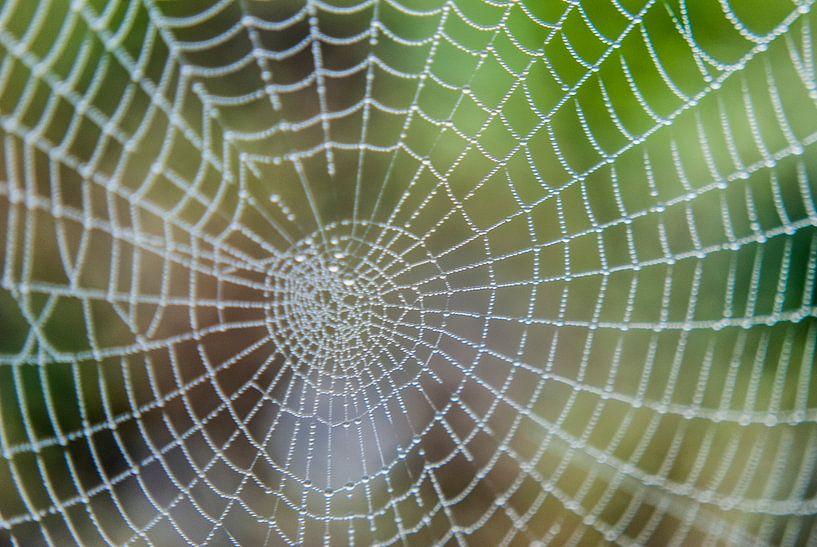 Spinnenweb dauw van Stephan Trip