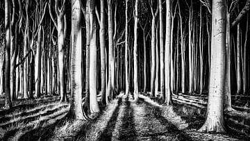 Ghost Forest, piXXelpark van 1x