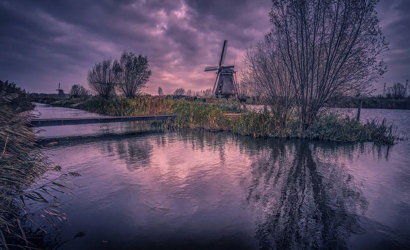 Wilgen spiegeling van Joris Pannemans - Loris Photography