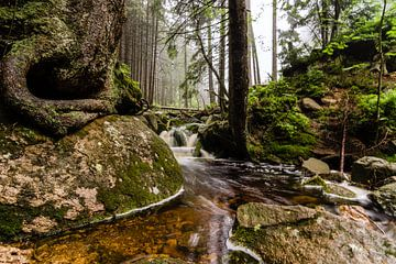 Het Magische Bos von Hans Brinkel