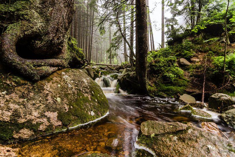 Het Magische Bos van Hans Brinkel