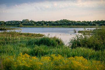 Naturschutzgebiet Zouweboezem von Ilse de Deugd
