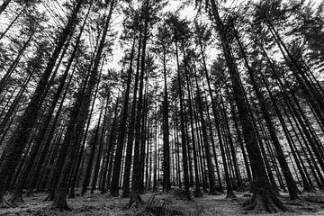 Schaduwen en hoge bomen van Licht! Fotografie