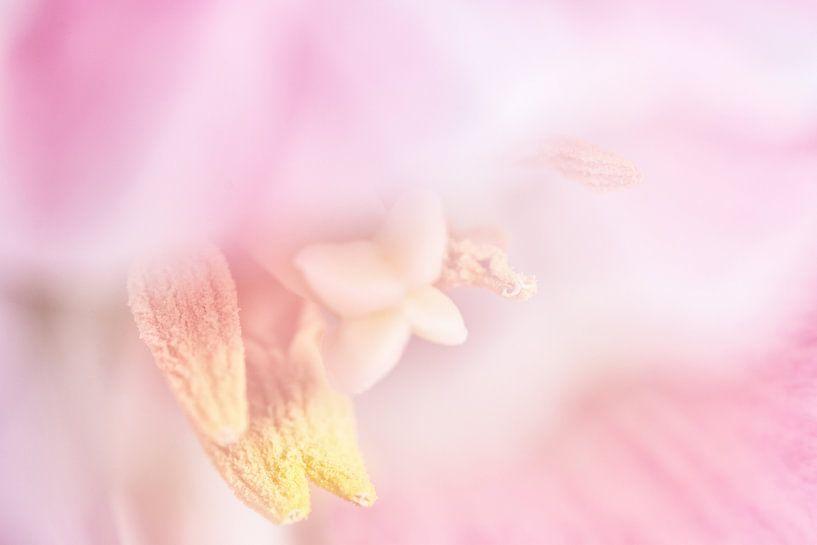 Tulp van Erna Böhre