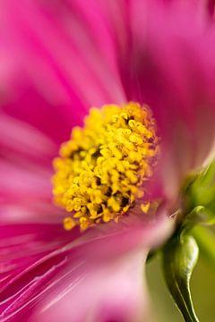 Rosa Kosmos Unschärfe von Annika Westgeest Photography