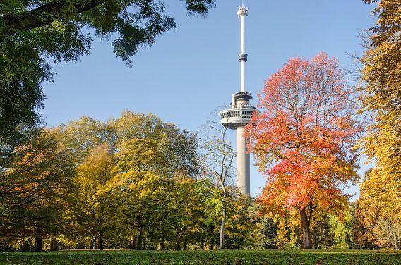 Het Park, de Euromast en de amberboom van Frans Blok
