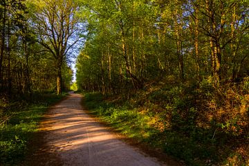 Forest Path 'Spring' van William Mevissen
