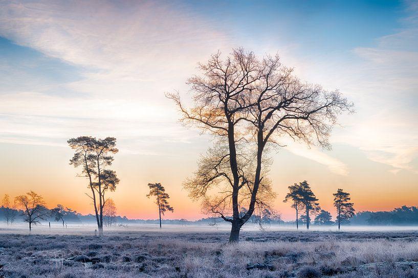 Lever de soleil froid sur Mark Bolijn