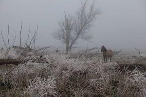 Konik paard in de mist en sneeuw van