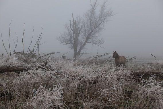 Konik paard in de mist en sneeuw