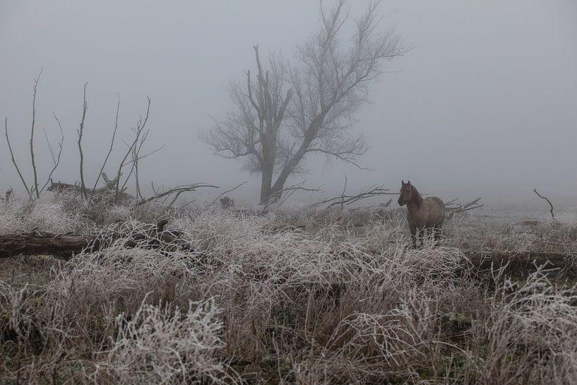Konik paard in de mist en sneeuw van Leanne lovink