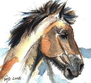 Pferd Jeremy