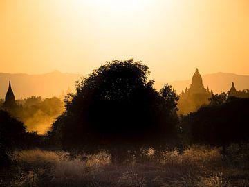 Myanmar - Bagan - Ein spiritueller Baum von Rik Pijnenburg
