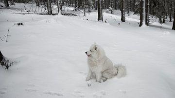 Hond in de sneeuw van BVpix
