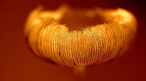 Gouden sieraad