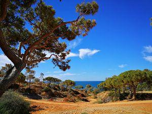 Algarve finest