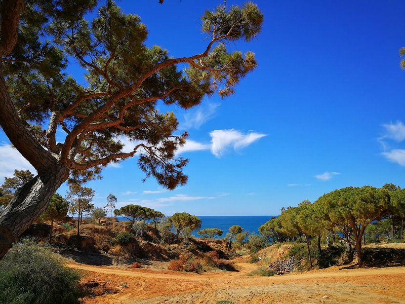 Algarve finest sur Marc Struik