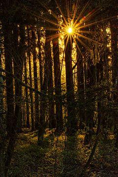 Sonnenaufgang im Wald von Johnny Flash