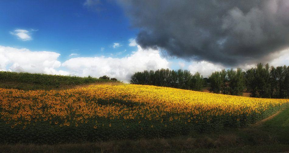 Het veldje van Vincent