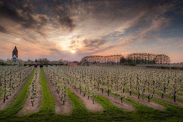 Kerk Lienden met fruitboomgaard von Moetwil en van Dijk - Fotografie