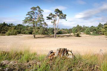 Holländisches Dünengebiet von Mark Bolijn
