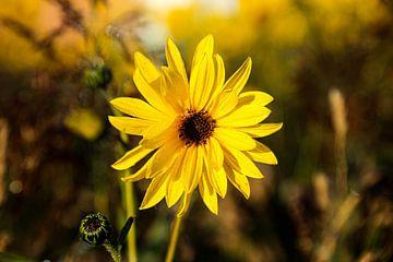 gelbe Blume von Satur8 .nl