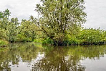 Sur les rives d'une réserve naturelle néerlandaise sur Ruud Morijn
