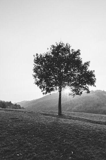 De eenzame boom (in zwart wit)